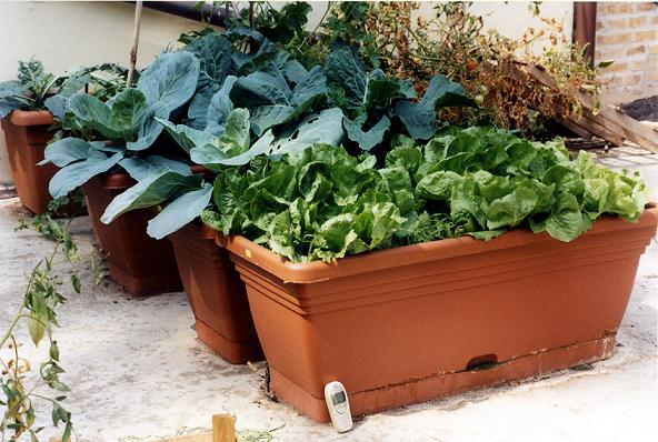 Coltivo l 39 orto in cortile o sul balcone vivi con stile - L orto in giardino ...