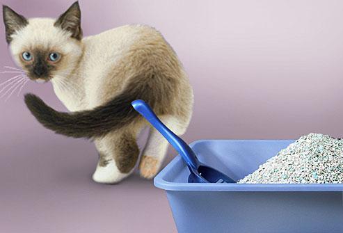 Al Mio Gatto Compro La Lettiera Compostabile Vivi Con Stile